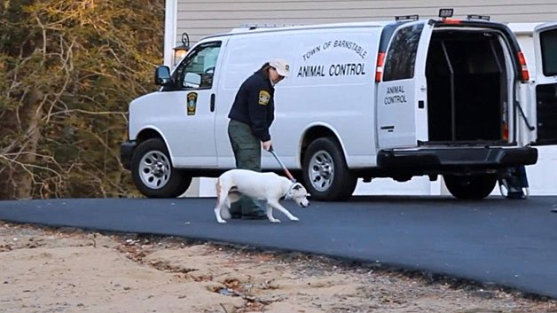 marstons mills cougar women Marstons mills — in what was called a rare, high-risk event,  mills  department, working with police, rescued a woman who had fallen.