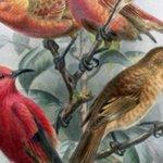 13 Bird Species Declared Extinct