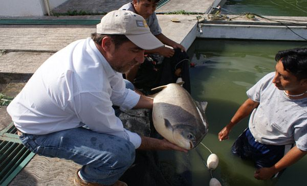 Semarnat impulsa producci n de totoaba en cautiverio para for Criaderos de pescados colombia