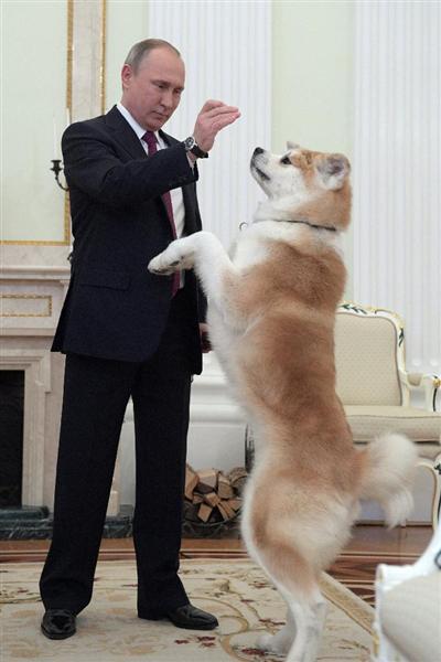 プーチン露大統領に贈った秋田犬「ゆめ」生きていた! 日本メディアのインタビューに登場 https://t.co/fmWyggHCjS
