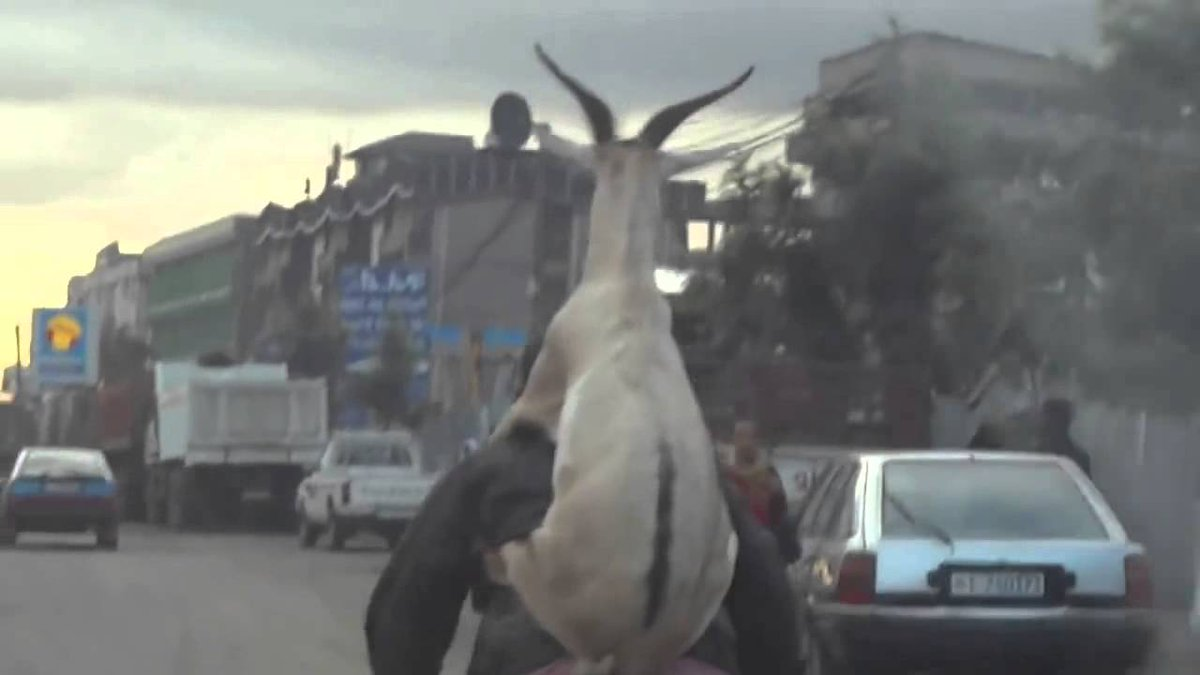 Two men steal a goat, but what they do to it is CRAZY