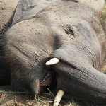 SA man arrested in Moz national park on poaching charge