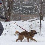 Arctic temps, more snow to hit metro Detroit