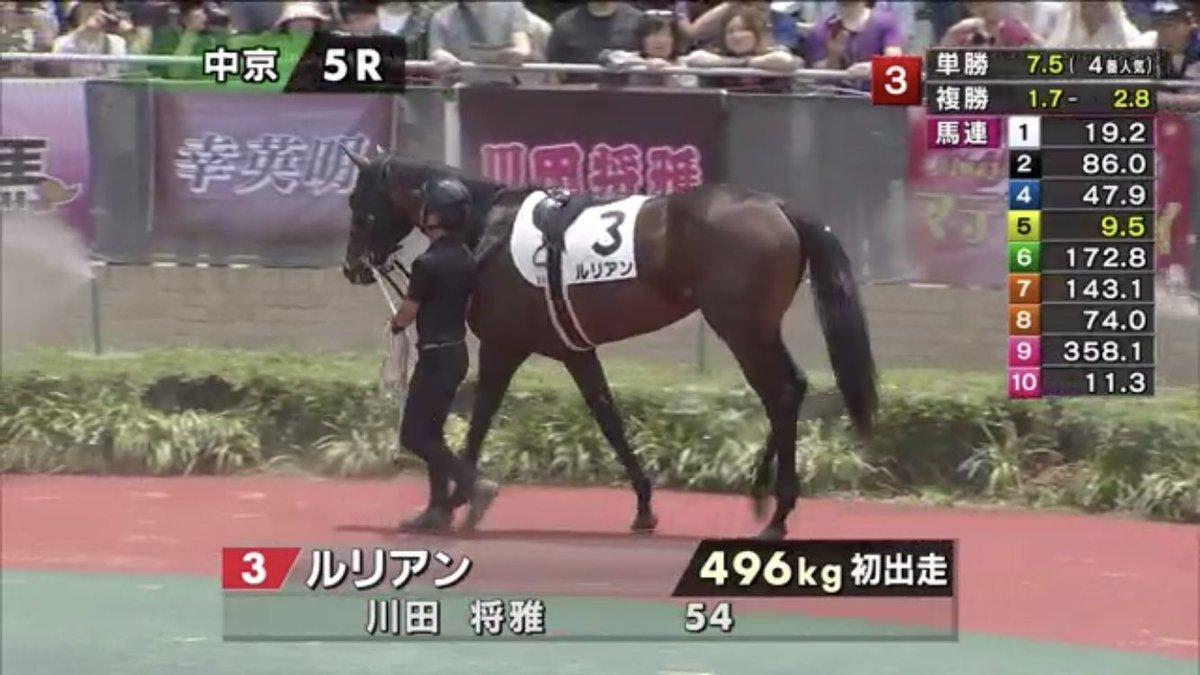 test ツイッターメディア - 中京5R2歳新馬戦に、#ルリアン。  父 #キズナ 、母 #フレンチバレリーナ の兄は日本ダービー馬 #フサイチコンコルド 、弟が皐月賞(GI)馬 #アンライバルド という良血馬だよ。ちなみに、馬名の意味はフランス語で「絆」。  #うまび https://t.co/nBwt6bFzLy