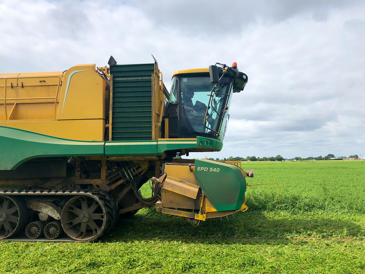 test Twitter Media - We've been out with a farmer from #Lincolnshire filming his #pea #harvest as he tells @SarahClarkITV from @itvcalendar about the troubles he's having due to the flooding in #wainfleetfloods @YesPeas https://t.co/OiIvF5N5A7