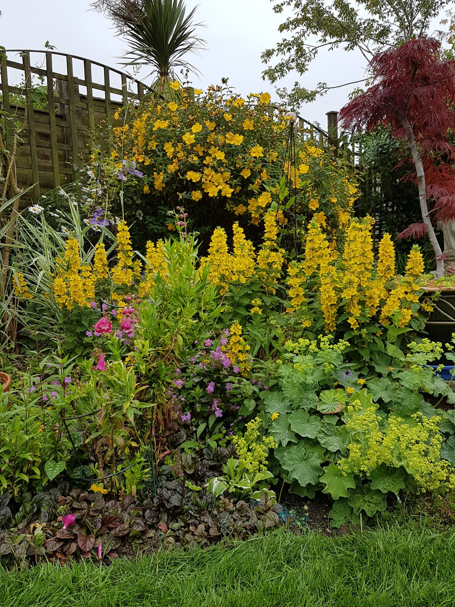 "Yeah they were ""nearly"" all yellow... #Colday 😉 #gregsgardens #wednesdaymotivation https://t.co/F42SHzc6Fd"