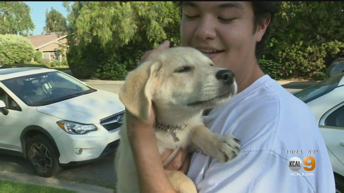 Miracle Puppy Reunited With Owner 13 Days After Accident - CBS Los Angeles