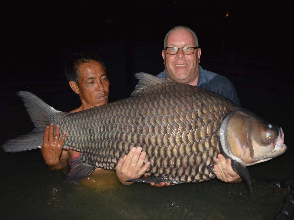 1<b>20lb</b> Siamese carp  #Thailand #2016 #carpfishing https://t.co/RT9IGHhanN