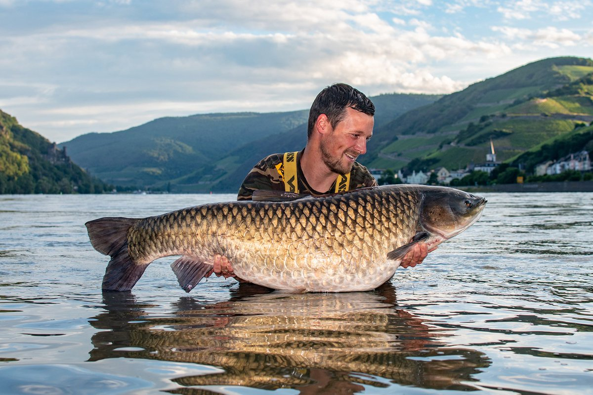 From the big River Rhein. What a shot. #carpfishing #MondayMotivation  #<b>Vasswaders</b> #fishng ht