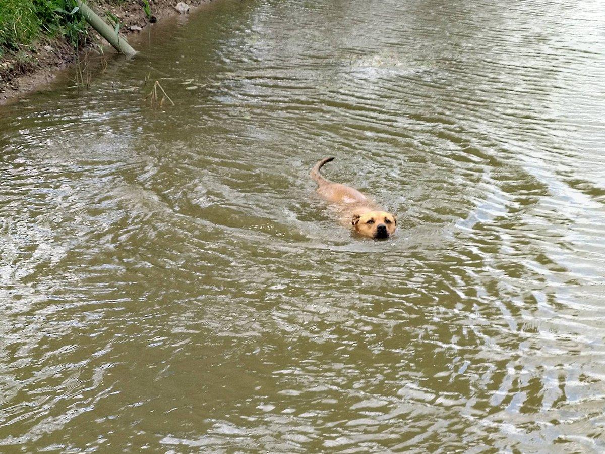 Not helpful, Saf... #RumBridgeFisheries #carpfishing #Suffolk https://t.co/duUUFd628e