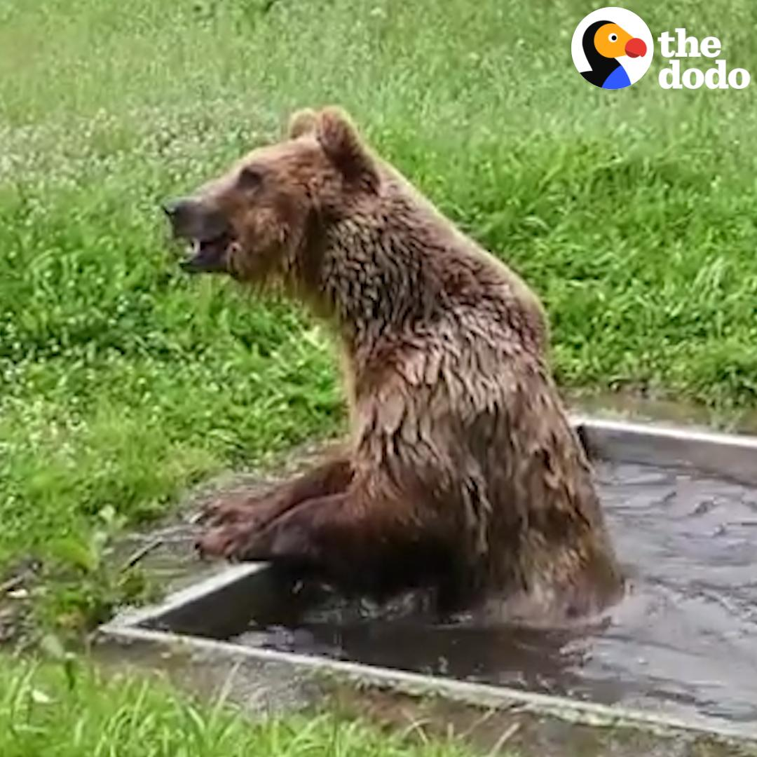 RT @dodo: This bear spent 8 years in a cage — and he's so HAPPY to have his own pool ???? https://t.co/kMkTiTV2kO