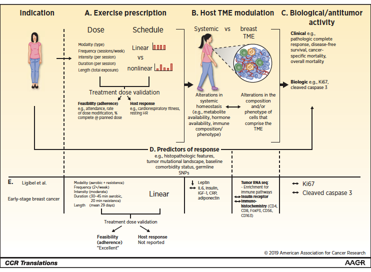 THERAPEUTIC EXERCISE is associated with improved outcomes in early-stage breast cancer. A preoperative window of opportunity studies provide a setting in which to test the short-term effects of novel treatment strategies on validated surrogates. https://t.co/Tj9xvVD4cD