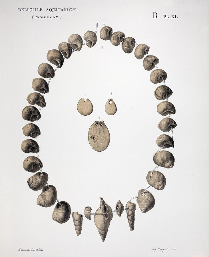 """Shell and ivory beads (~30,000 yr) from the site """"Cro-Magnon"""" in Les Eyzies-de-Tayac-Sireuil, SW France. They were discovered amidst the Gravettian human burials in March 1868 during railway works. In: Lartet & Christy (1875) Reliquiae Aquitanicae,1865-1875. Photo by P.D. Stewart https://t.co/bipuWaxZxY"""