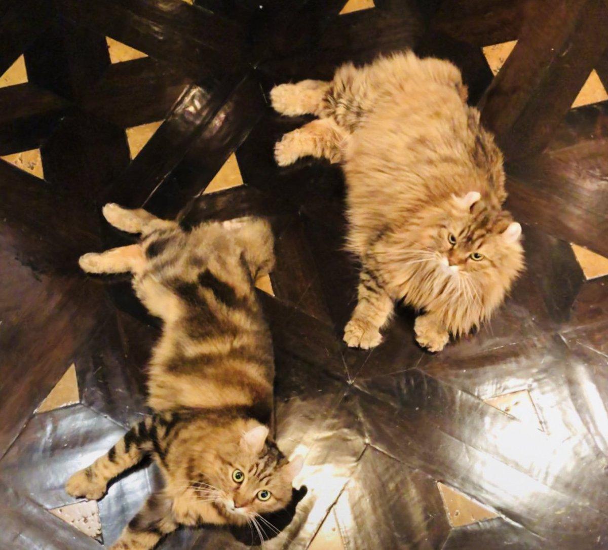 Cats on Bathroom Floor https://t.co/p0xC2M2i6V
