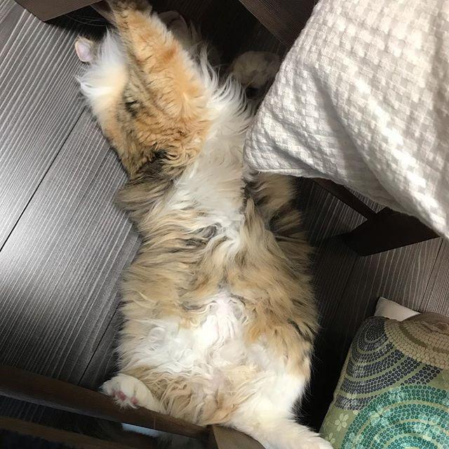 猫 へそ 位置
