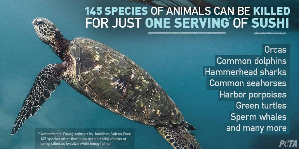 RT @PETAUK: Animals like dolphins, turtles, and more are caught in fishing nets and discarded ???? #WorldWildlifeDay https://t.co/F3Ej4fQeMW