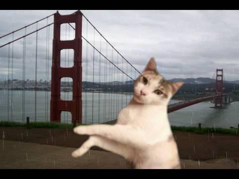 RT @youtubecats: Dancing Autotune Cats https://t.co/1gC5g6oxBN #cats #pets #animals #lolcats https://t.co/7XtUOwKU0I