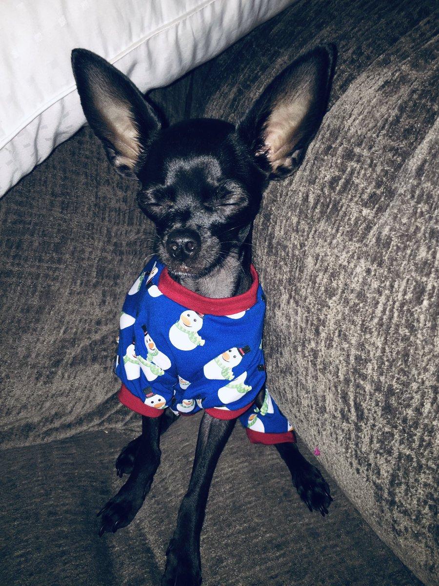 My lil man Rocco .....my tiny baby????????❤️❤️ look at those ears ???? #chiauaua #doggie https://t.co/2kjgVzvdaj