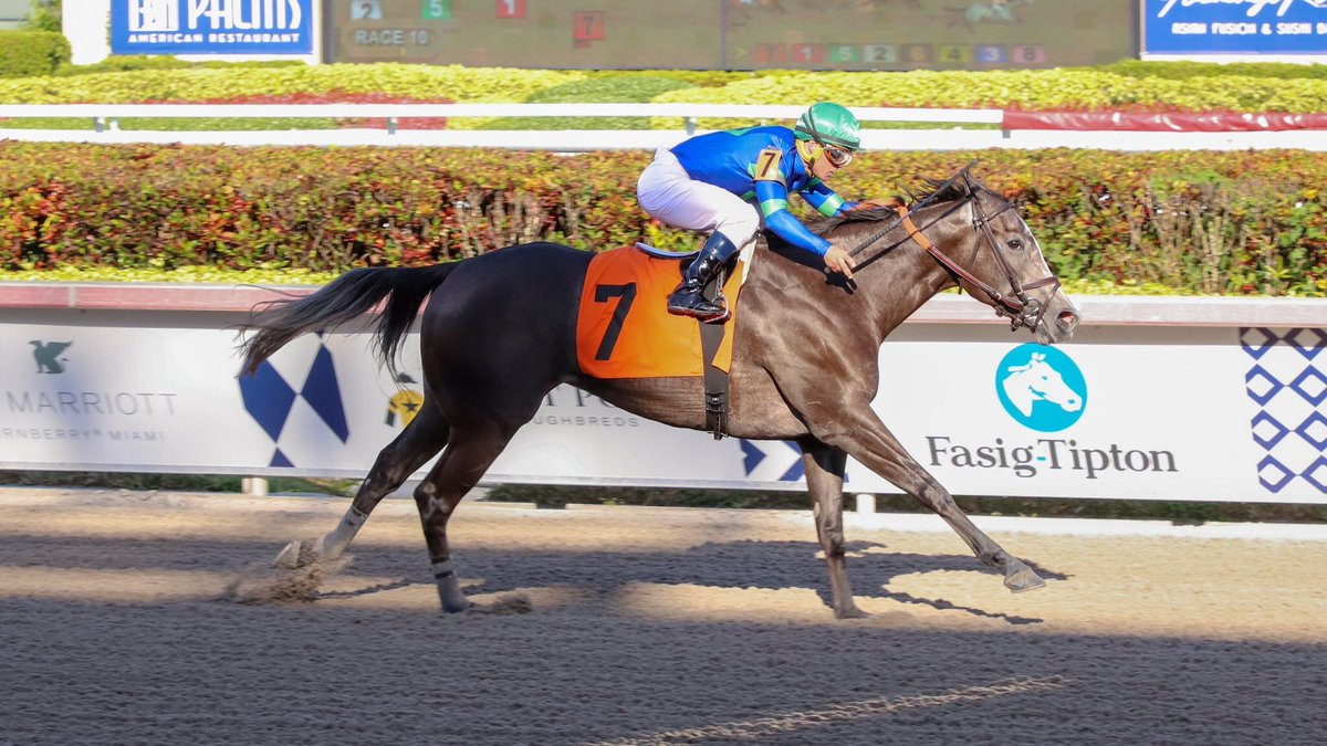 test Twitter Media - Royal Charlotte (3yo Cairo Prince filly) ran an 80 Beyer yesterday for Chad Brown and @jjcjockey nice first out number and very first win for new partnership First Row Partners. Great way to get things going! https://t.co/NduxS9Eh3T