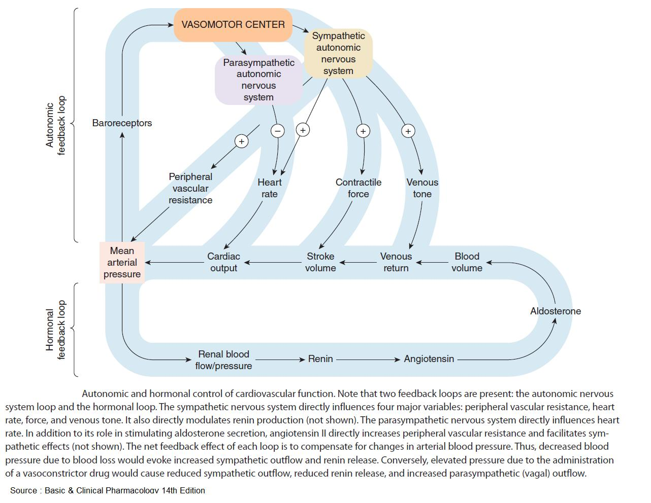 Autonomic and Hormonal Control of Cardiovascular Function . #meded #foamed #usmle #medicine https://t.co/yCseVEEQjS