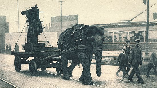 With so many horses enlisted for service in World War One, Lizzie the elephant was used to cart munitions in Sheffield #FactoftheDay https://t.co/FZatOLTfBA