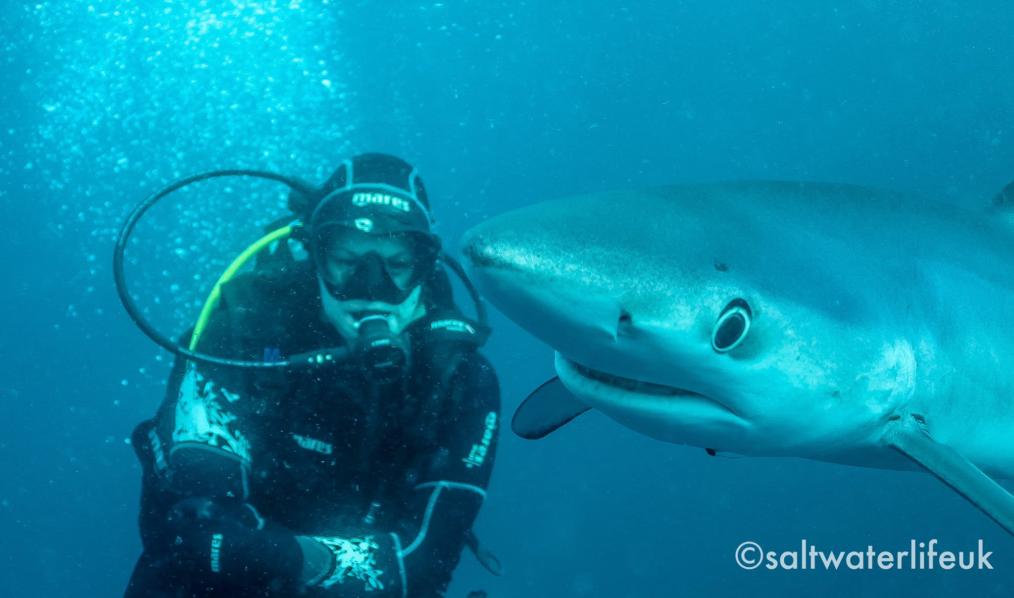 Getting photobombed by a blue shark the other day! #blueshark #sharkdiving #photobomb #scuba #shark https://t.co/hQwmWHGXv6