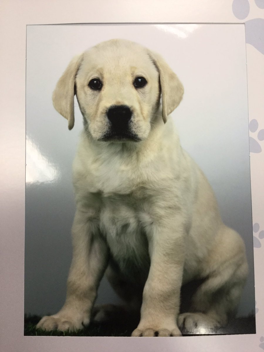 test Twitter Media - Lovely news to start the weekend!  Charlie the Guide Dog was born on February 1st.  We raised over £2500 to sponsor Charlie through his training and we look forward to getting 'pupdates'. Thank you again for your kind donations. https://t.co/GJuZPJyZPx