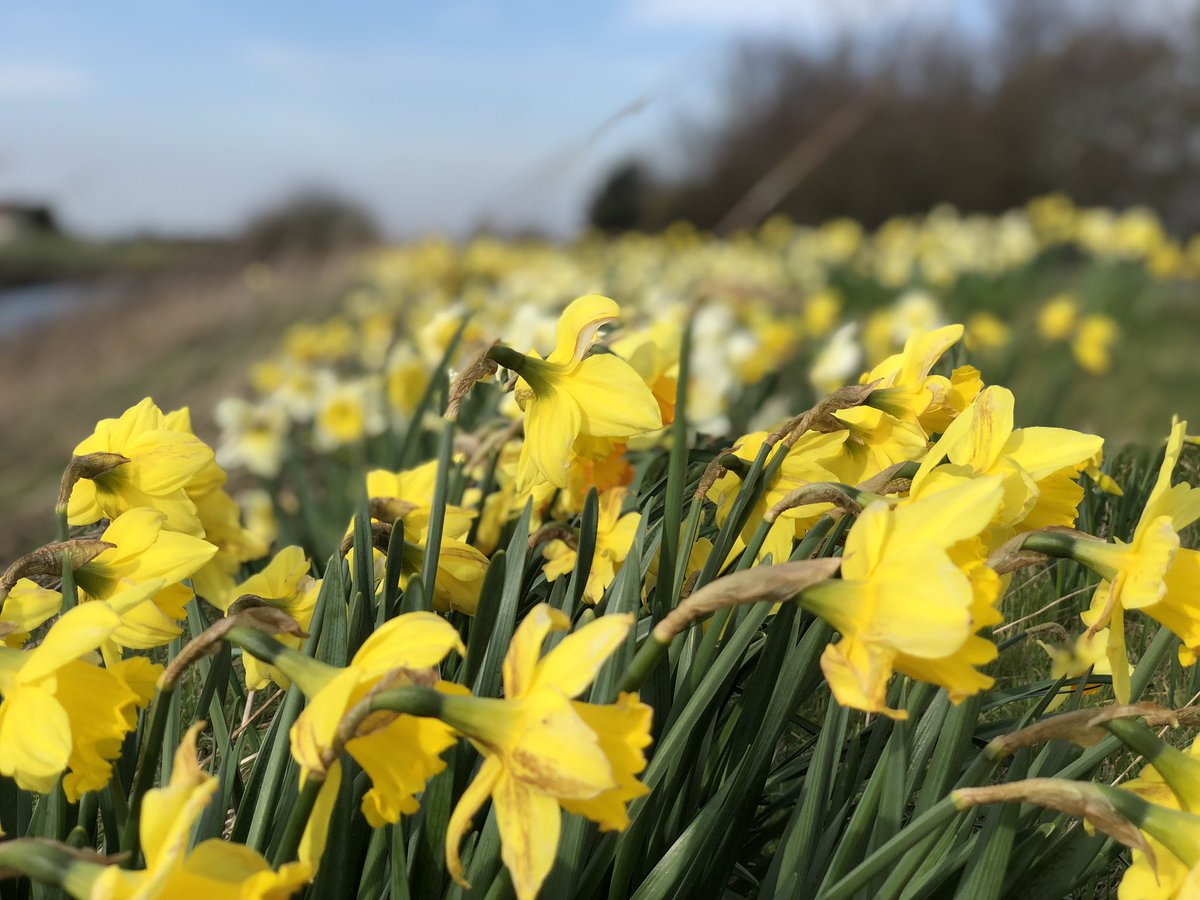 test Twitter Media - A few more daffodils to change the mood on Twitter, Spring is here @itvweather @JonMitchellITV @itvcalendar https://t.co/t5xixBms0f