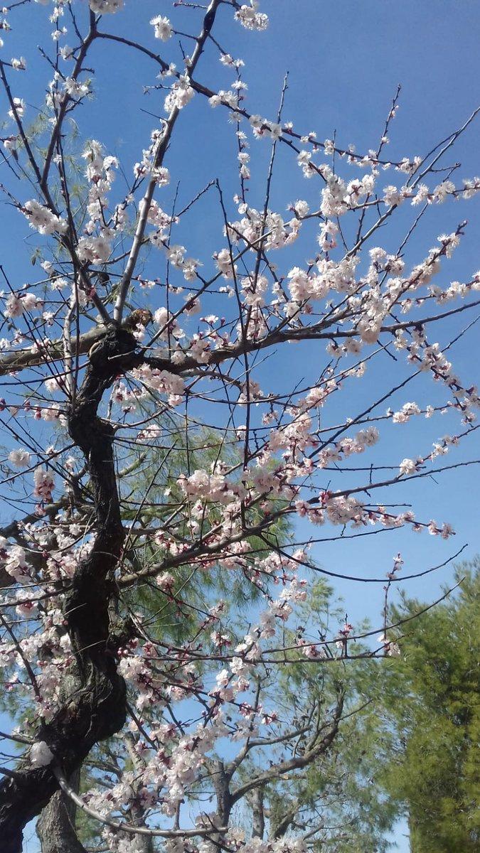 #Primavera