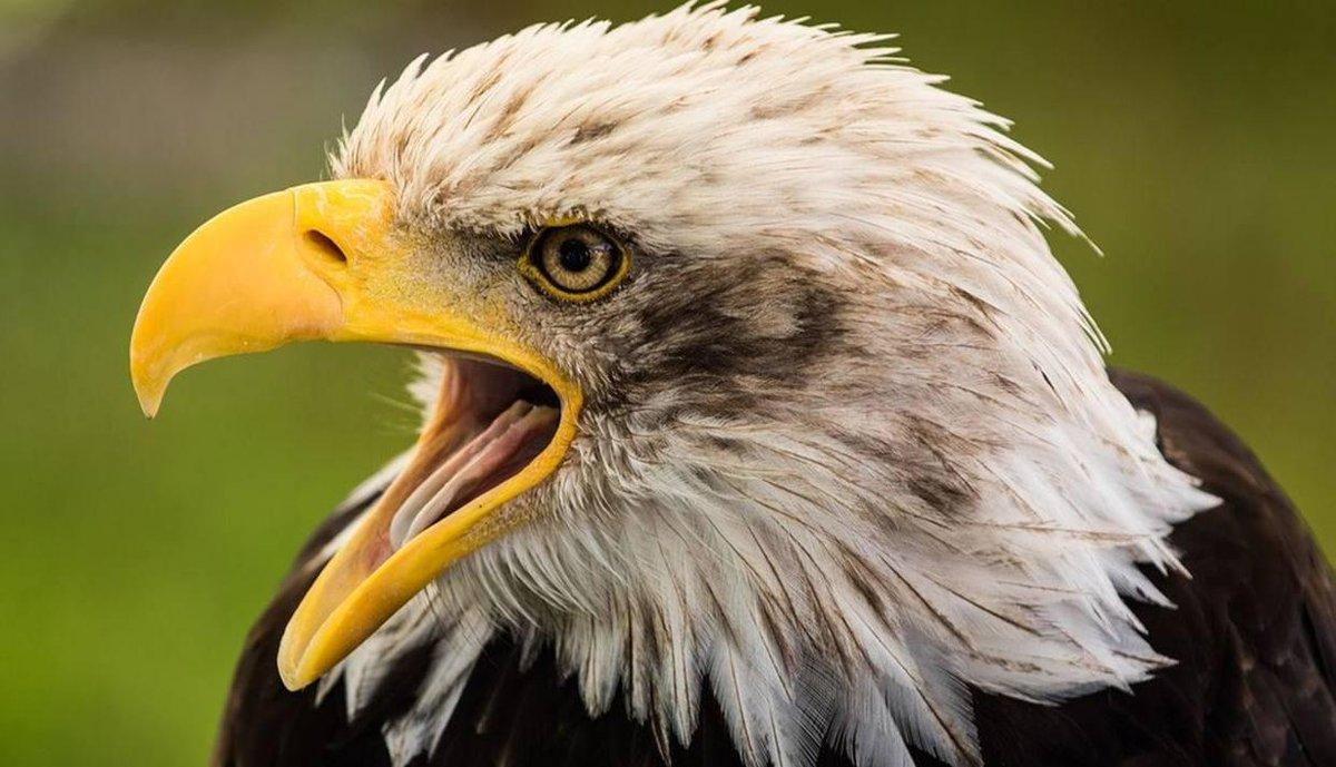 [VIDEO] El impactante momento en que un águila ataca a un canguro https://t.co/LMPBIwolKj  https://t.co/h1DFror2Tu