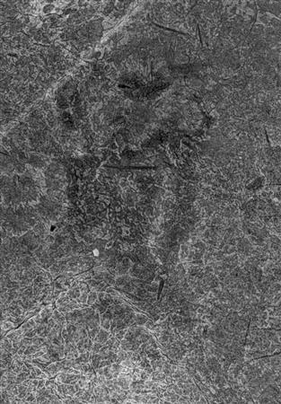 【X線撮影】キトラ古墳壁画に十二支像の「辰」か...