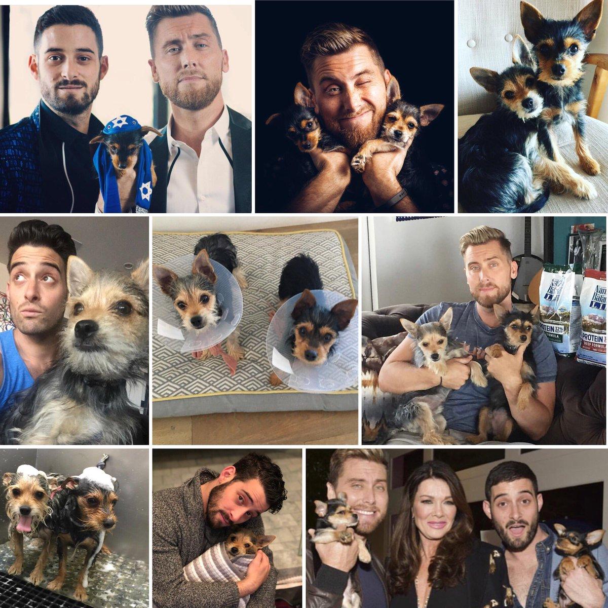 RT @BassTurchNsquad: Happy #NationalPuppyDay to @LanceBass & @MichaelTurchin's pups Chip and Dale! ???? https://t.co/jvtDrEvBIQ