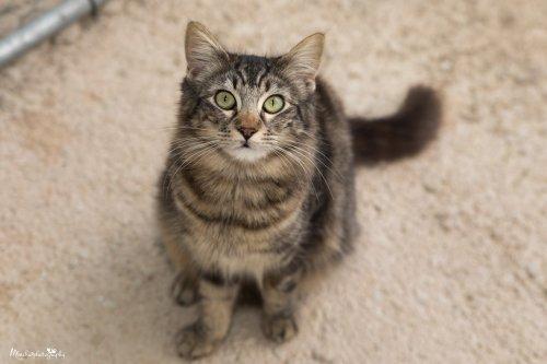 🐱💕🐈🐾🥰JULIET #AdoptMe  https://t.co/9vJ6tQRA3U  #catsoftspain #cats #catsoftwitter #adoptcats #AdoptDontShop https://t.co/zi9G5yO98s