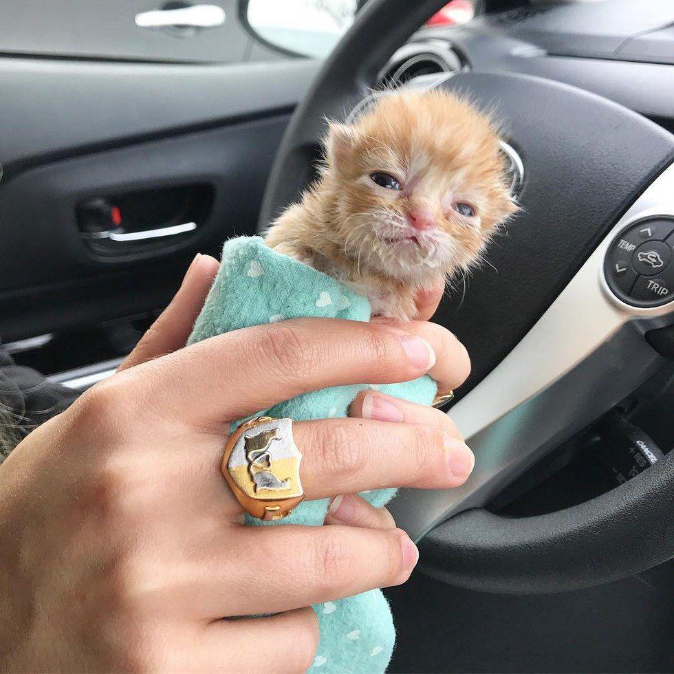 RT @netgeekAnimal: ティッシュ箱に入れられた捨て猫の話 | netgeek https://t.co/JtlxcUDZT3 https://t.co/RdzyWVSQJM