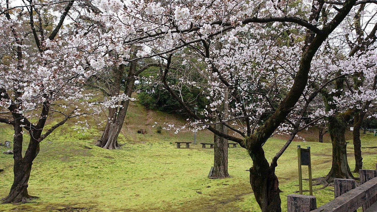 RT @tamiyan23: 🌸咲いてるっちゃ咲いてるな(^-^) 道端側やけどw #熊本城 #桜 https://t.co/7wKc3u3PxC