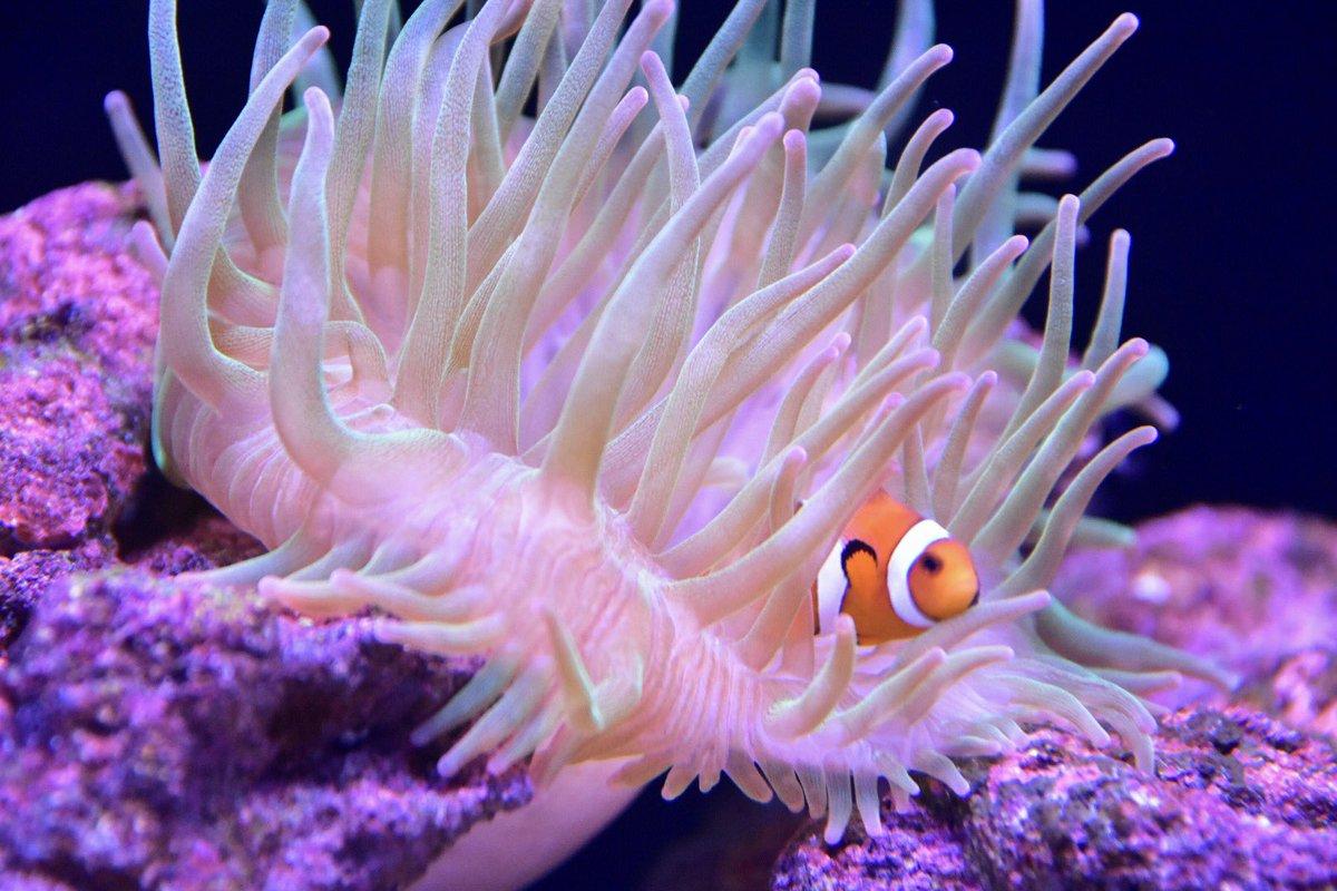 test ツイッターメディア - 【今日の一枚 ③(2019/03/26)】 すみだ水族館で撮影(´-ω-`)📸 鮮やかな熱帯魚たち〜🐠🐠🐠  #写真好きな人と繋がりたい  #かようび #キリトリセカイ  #ファインダー越しの私の世界  #写真で奏でる私の世界 https://t.co/v25yC3bWPv