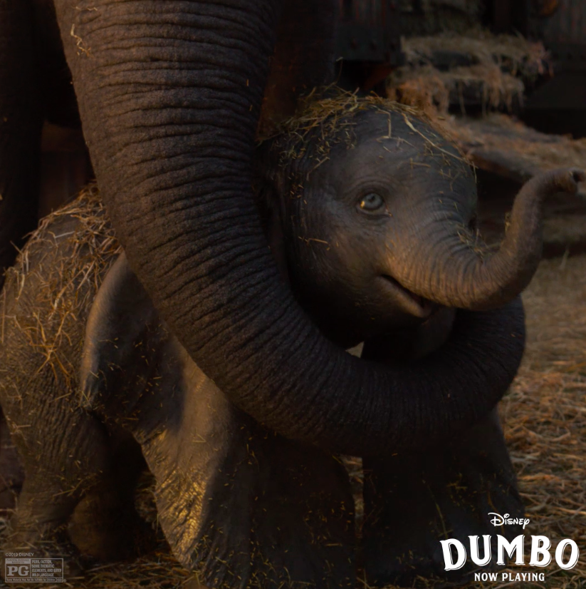 RT @Dumbo: We're all family here. See Disney's #Dumbo, now playing in theatres! https://t.co/3gjWnnb0E9