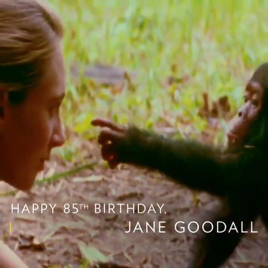 Happy birthday Jane Goodall! Thank you for taking humanity further. https://t.co/ayPhjhykuO