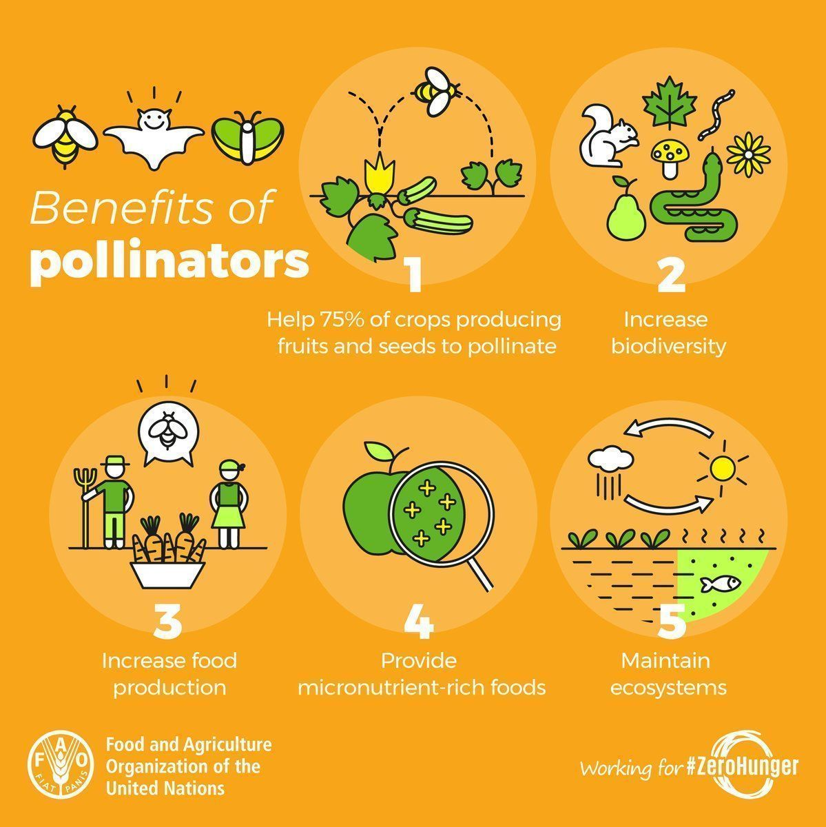 Bees and other #pollinators are threatened with extinction. Yet they are vital to life on our planet.  Here are just 5 reasons why we need to protect our pollinators 👇   #ZeroHunger #bees https://t.co/NSm0xOsul2