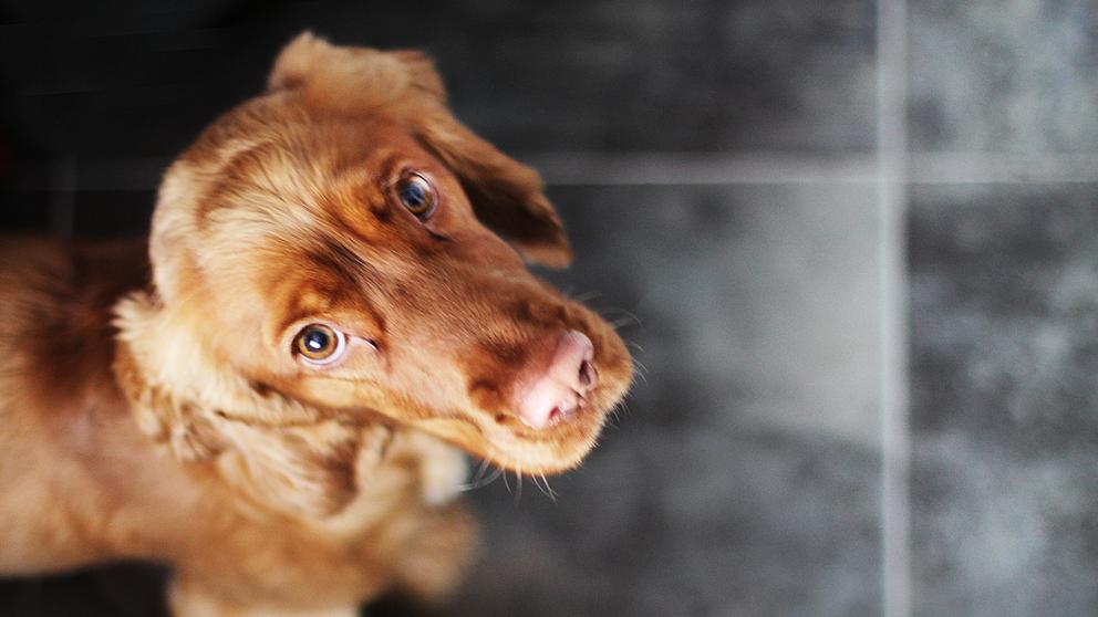 test Twitter Media - ¿Es el perro el mejor amigo de la salud pública? https://t.co/lxKTGD4GyJ Vía: @LaVanguardia https://t.co/AglZcJbA78