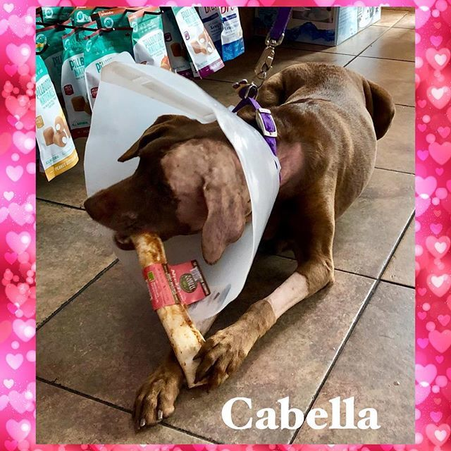 test Twitter Media - Cabella recently had some ear surgery and came in to restock on chews and treats. As you can see, she could not wait to enjoy them! #threedogbakeryalliance #alliancetowncenter #dogsafe #dogbakery #allnatural #unleashthelove #fortworthtx #dogsofinstagram … https://t.co/lGA6T1OERL https://t.co/5IVYtoiQQ9