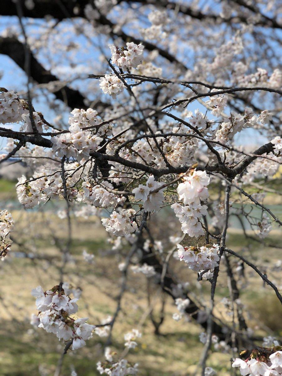test ツイッターメディア - 渋滞、混雑覚悟の【一目千本桜🌸】  先週気温が下がったので満開の桜を青空の下で見る事が出来た❗️桜見学前に『菓匠 三全』直売所で買い物をしたら、買い過ぎて荷物が重い🧳 #一目千本桜 #大河原 #柴田町船岡 #行くぜ東北 #おいでよ宮城 #菓匠三全 #直売所 #萩の調 https://t.co/j2YajdQJHP