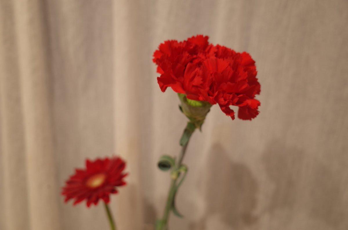 test ツイッターメディア - お花のお使いを頼んだら、結人が選んでくれた赤いカーネーション。隣は入園式でもらった赤いガーベラ。タンブラーのお使いで白色のを選んできてくれて「おかあさんしろすきだよね?」と言っていました。夜は、『やくそく』についてみんなで話しました。 https://t.co/MA1ZRYXlGm