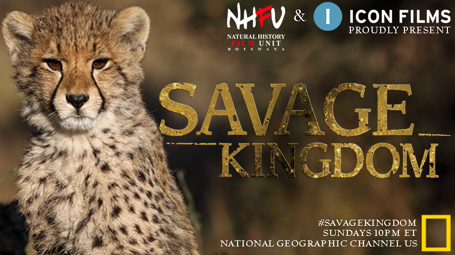 There's an all new episode of #SavageKingdom coming to @NatGeoChannel USA tonight at 10pm ET. Make sure you're watching for the latest lion vs. hyena showdown... https://t.co/n0fhEpDQHn