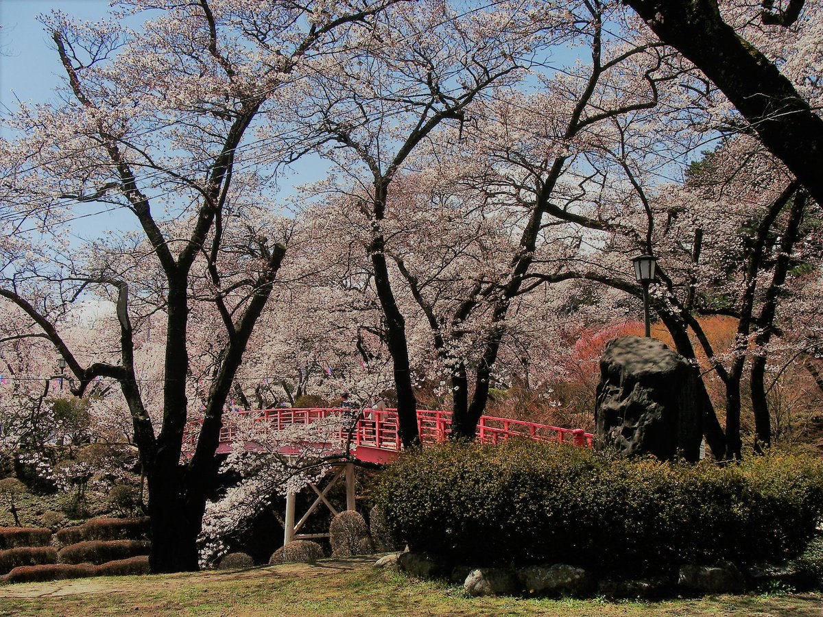 test ツイッターメディア - 伊那市・春日公園の桜~ 今朝のテレビ朝日「グッド!モーニング」のお天気検定は、高遠城址公園からの中継📺 高遠の西にある春日公園の桜も見頃になった🌸 春日公園にも桜雲橋のような、橋がある(縦写真)▼ 赤い橋の上に、桜色の雲が浮かんでいるかのよう🎵 https://t.co/4voIGPsASL