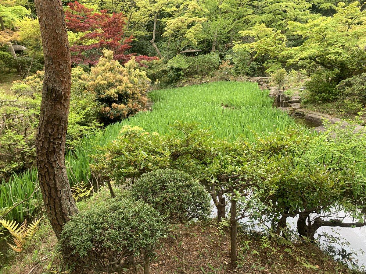 test ツイッターメディア - 尾形光琳展やってたから、根津美術館に行ってきた。言うてカキツバタはまだ咲いてなかったけど。今はシランが見頃。本館よりも庭園が好き。。。 https://t.co/BMMbvWtZ8n