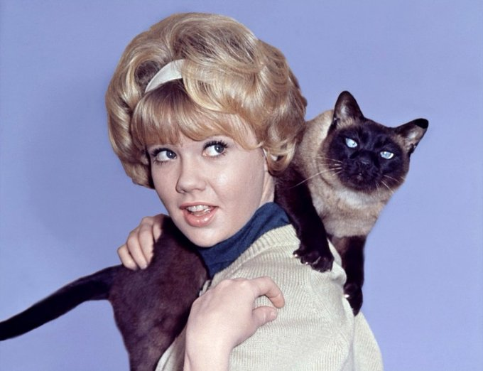 "Happy Birthday to Hayley Mills, star of ""That Darn Cat!\"
