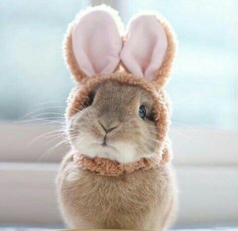 #Pasqua