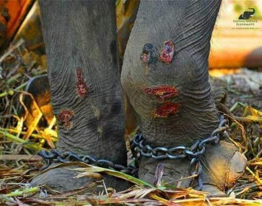RT @Potter6Nat: Stop this activity!!!!!!😡😡😡 https://t.co/adThAf1beB