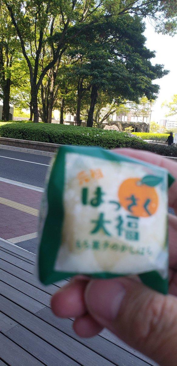 test ツイッターメディア - はっさくちゃんでは無いけれど はっさく大福を食べれた。おいちい 帰りの広島空港ではっさくちゃん買えるかな https://t.co/einnZ5izKu